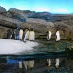 Berlin Zoo - penguins